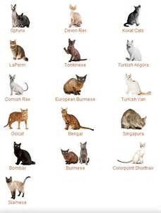 Cat Breeds That Don T Shed A Lot cats btchonheels