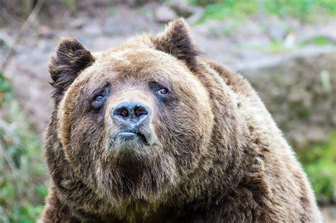 Sad Bear Meme - sad bear is sad