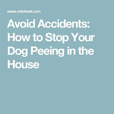 dog accidents in the house best 25 dog pee ideas on pinterest dog pee smell cleaning dog pee and pet urine
