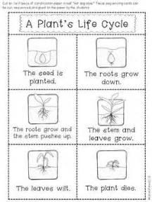 Plant life cycle worksheet kindergarten on plant life cycle worksheets