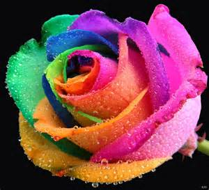 Colors For Rooms happy roses shockblast