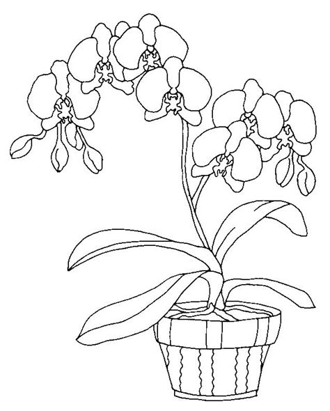 Orchid Coloring Pages orchids coloring page 10 wallpaper and children s