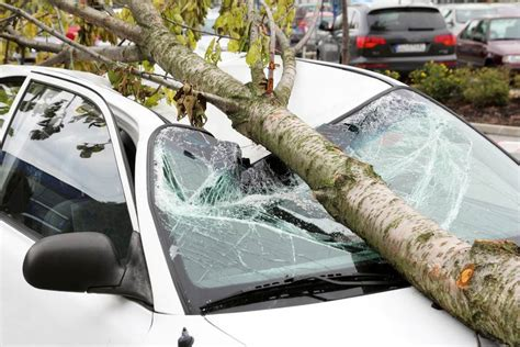 auto insurance when a tree timber 7 signs a tree may be about to fall safebee