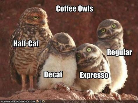 Funny Owl Memes - funny coffee owls dump a day