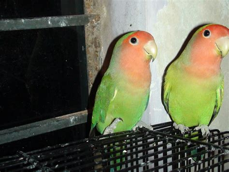 price of exotic pet birds in india