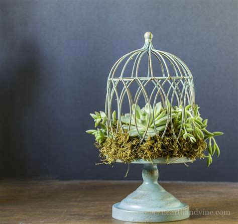 how to make a succulent planter how to make a succulent birdcage planter hearth vine