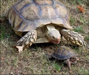 box turtle animal wildlife