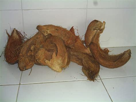 pupuk alami arang batok kelapa manfaat pohon kelapa mulai dari akarnya sai bunganya