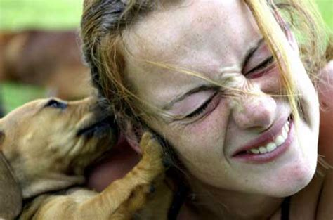 biting a s ear the canine kid connection