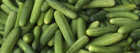 types of cucumber lemon persian hothouse armenian gherkin and more berkeley wellness