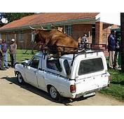 This Is Africa  Safari Car Rental Namibia