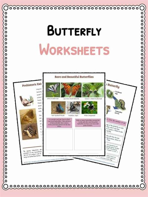 Butterfly Facts Worksheet butterfly facts information worksheets for