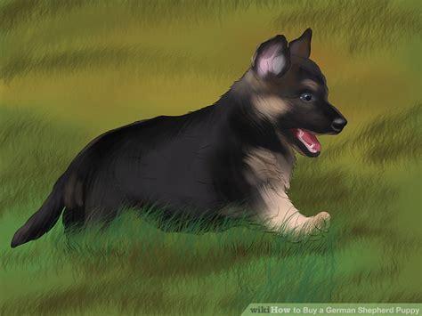 buy german shepherd puppy 4 ways to buy a german shepherd puppy wikihow