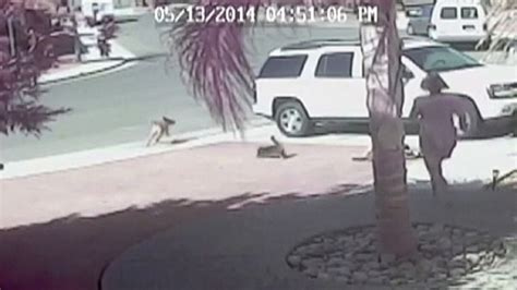 cat saves boy from family cat saves boy from attack abc news