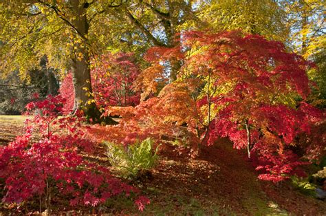 Best Home Colour Mike Boyes Nature Photography Trees Leaves Amp Autumn