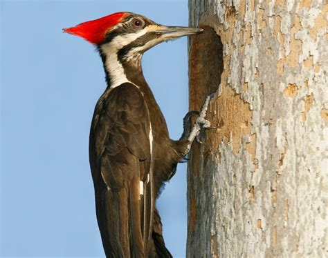 the woodpecker woodworking wood meaning and interpretations stop