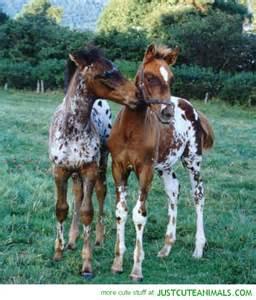 Beautiful Foal Horses