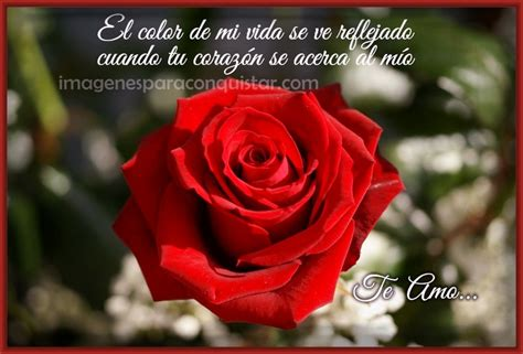 imagenes con rosas y frases bonitas imagenes hermosas de rosas rojas con frases imagenes de rosa