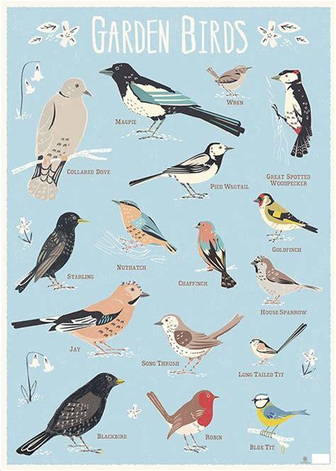 164 best images about 5 rspb garden birds fasci garden