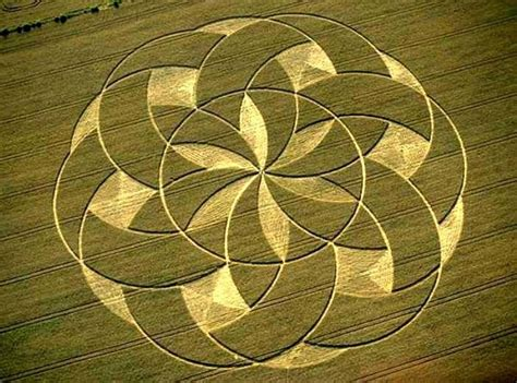 circle pattern in nature 17 best images about crop circles on pinterest seasons