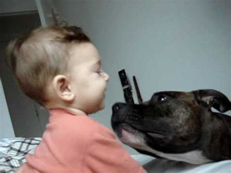 attacks baby pittbull attacks baby