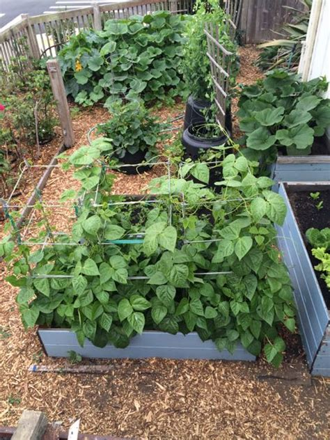 square foot gardening flowers square foot gardening anyone containers tomatoes