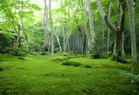 Moss Garden Kyoto by Jeffrey Friedl S 187 An Introduction To Kyoto S Giouji