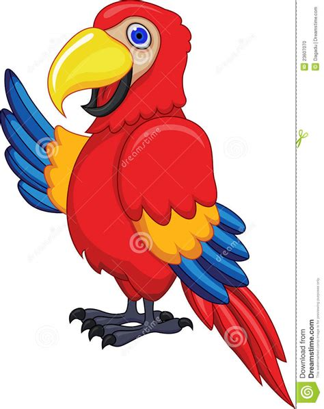 cartoon cockatiel macaw cliparts