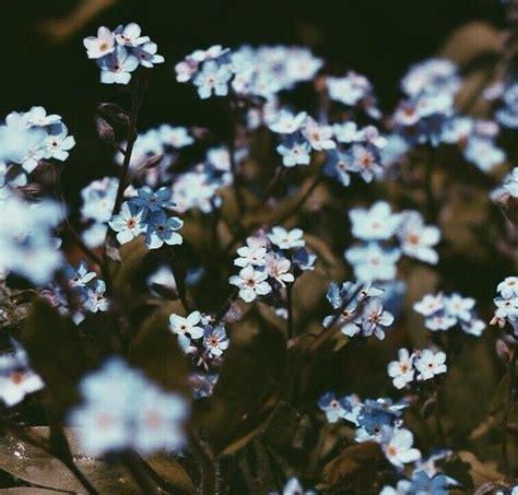 flower wallpaper aesthetic 556 best a e s t h e t i c s images on pinterest