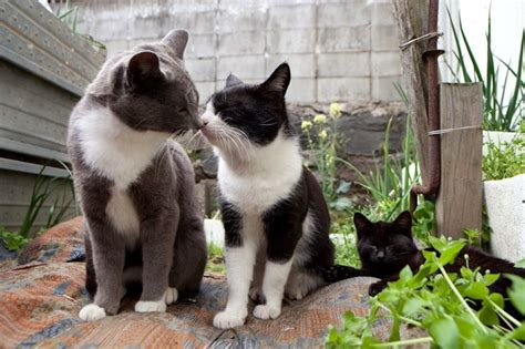 cat island in japan so there s an island where many cats roam freely and it s