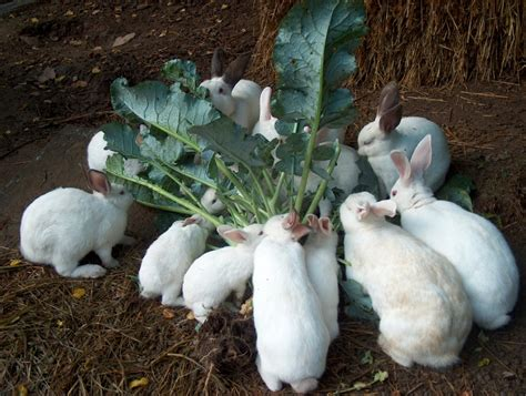 Rabbits In Garden by Palazzo Rospo Broccoli Bunny Breakfast