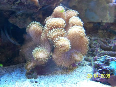 blade of darkness l epopea nano fragging with prop toad stool leather coral