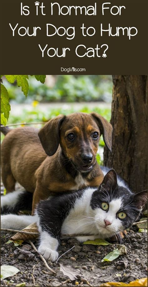 8 Doggies Id To Meet by 6705 Best Tips Images On Doggies