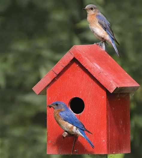 canadian wildlife federation is painting a bird house