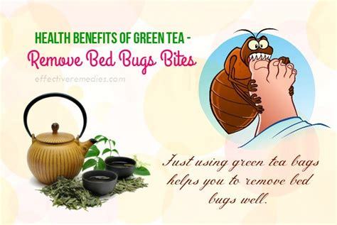 side effects of bed bug bites 45 beauty health benefits of green tea its uses side effects