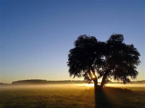 el arbol de la 8437605229 el 225 rbol de los amigos un gran mensaje para la vida un universo mejor