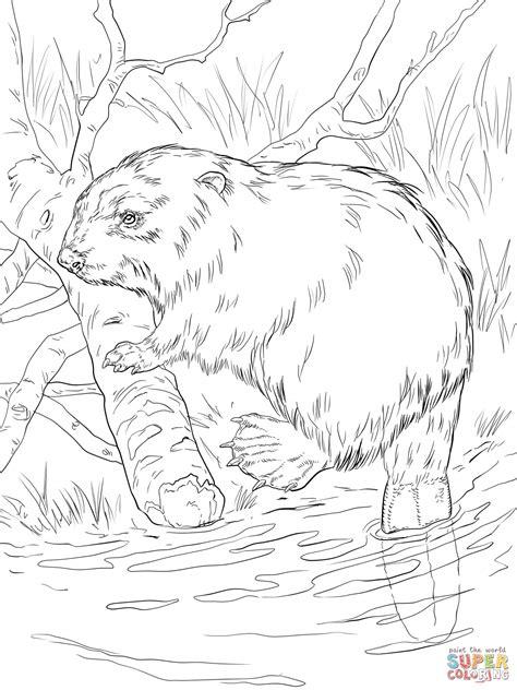 river bank coloring page drawing river banks images