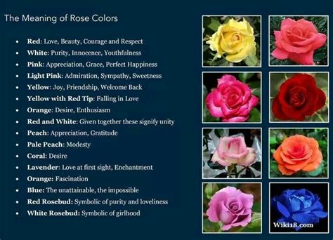 pink color meaning meaning behind rose colors good to know pinterest