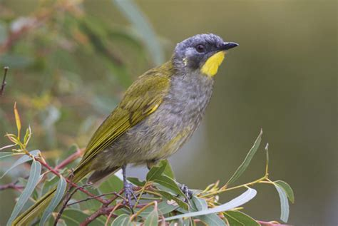 birdlife