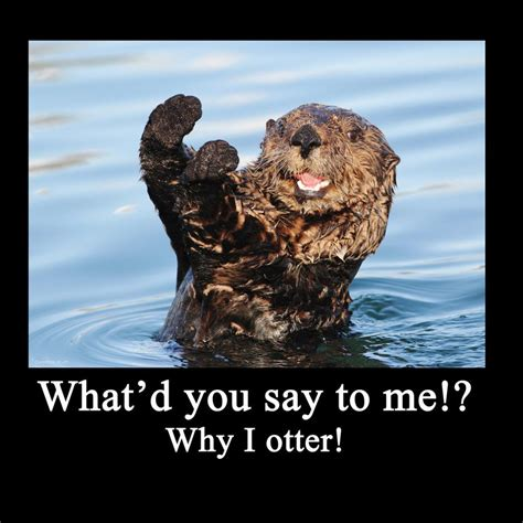 Otter Meme - sea otter quotes quotesgram