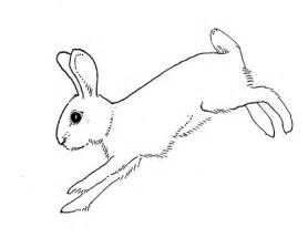 Rabbit Pictures Outline by How To Draw Rabbit Outline
