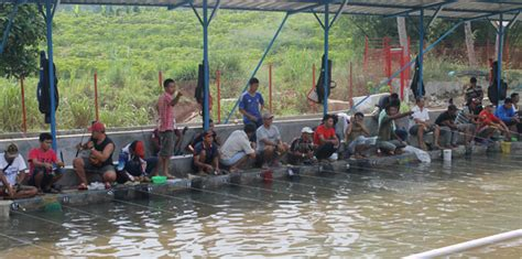 Umpan Ikan Umpan Wangi Djempol Premium umpan air tawar racikan reguler pandan wangi pelungan