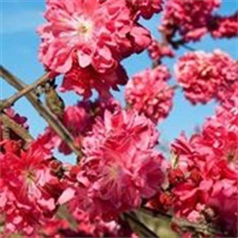 pero da fiore pero senza fiori domande e risposte orto e frutta