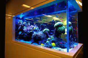 Aquarium Designs The Amazing Aquarium Design Indoor And Outdoor Design Ideas