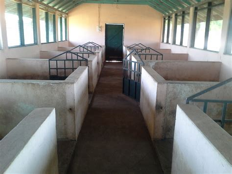 sle business plan on pig farming june 2013 pig farming and other business opportunities