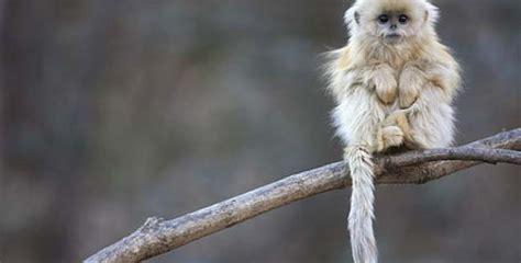 imagenes increibles de animales raros incre 237 bles animales raros que nunca creer 237 as que existen