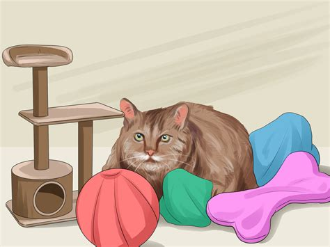 how to your to like cats how to get your cat to like you 13 steps with pictures