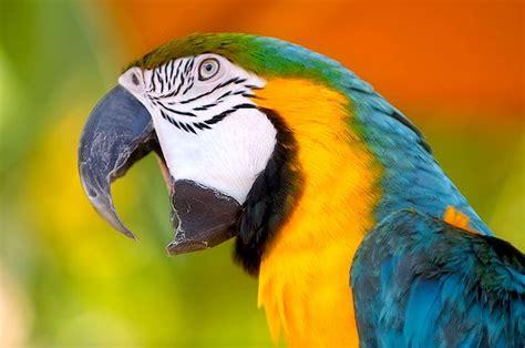 alimentazione pappagalli pappagallo ambulatorio veterinario