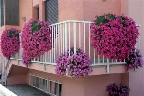 piante da terrazzo resistenti piante da balcone resistenti piante da terrazzo