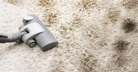 how to vacuum carpet best reviewed steam vacuum carpet cleaner fit your budget